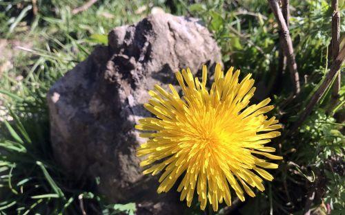 Blume mit Stein für Movement klein