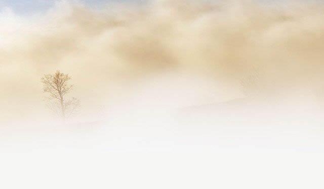 baum nebel klein
