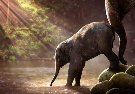 elefantenmutter schubst junges ins wasser