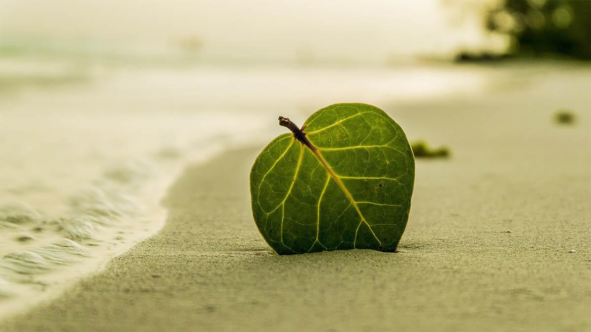 entspannung-blatt-am-strand