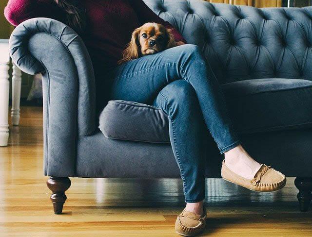 frau hund sofa klein