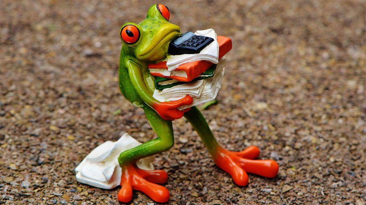 frosch-arbeitsstress