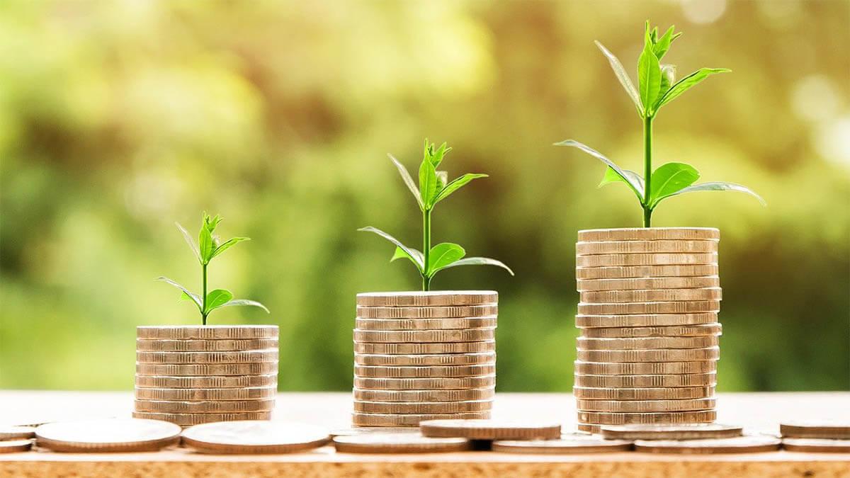 geld wachstum pflanze