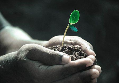 hand erde keimling pflanze