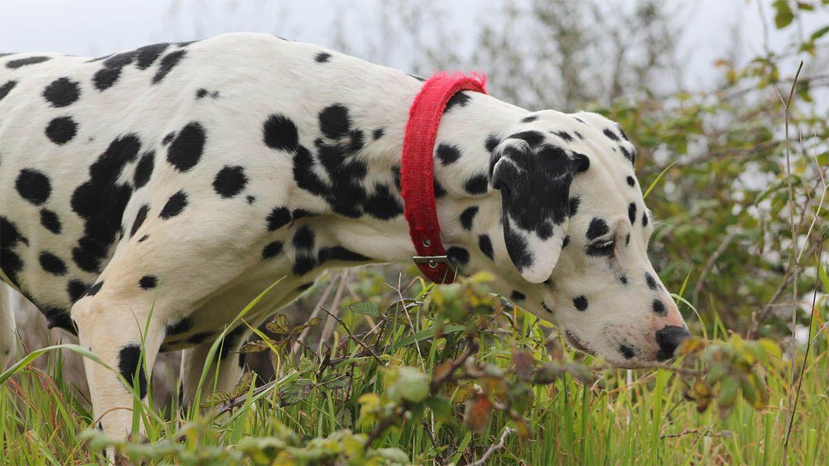 hund-giftpflanze