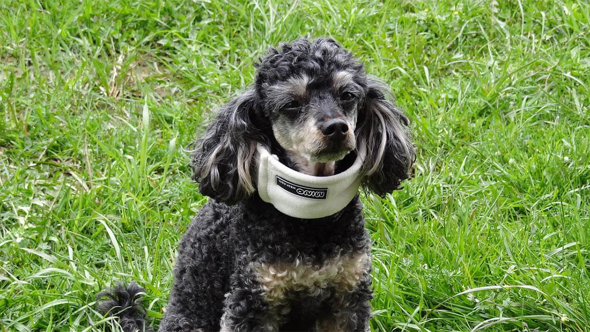 hund krank halskrause an
