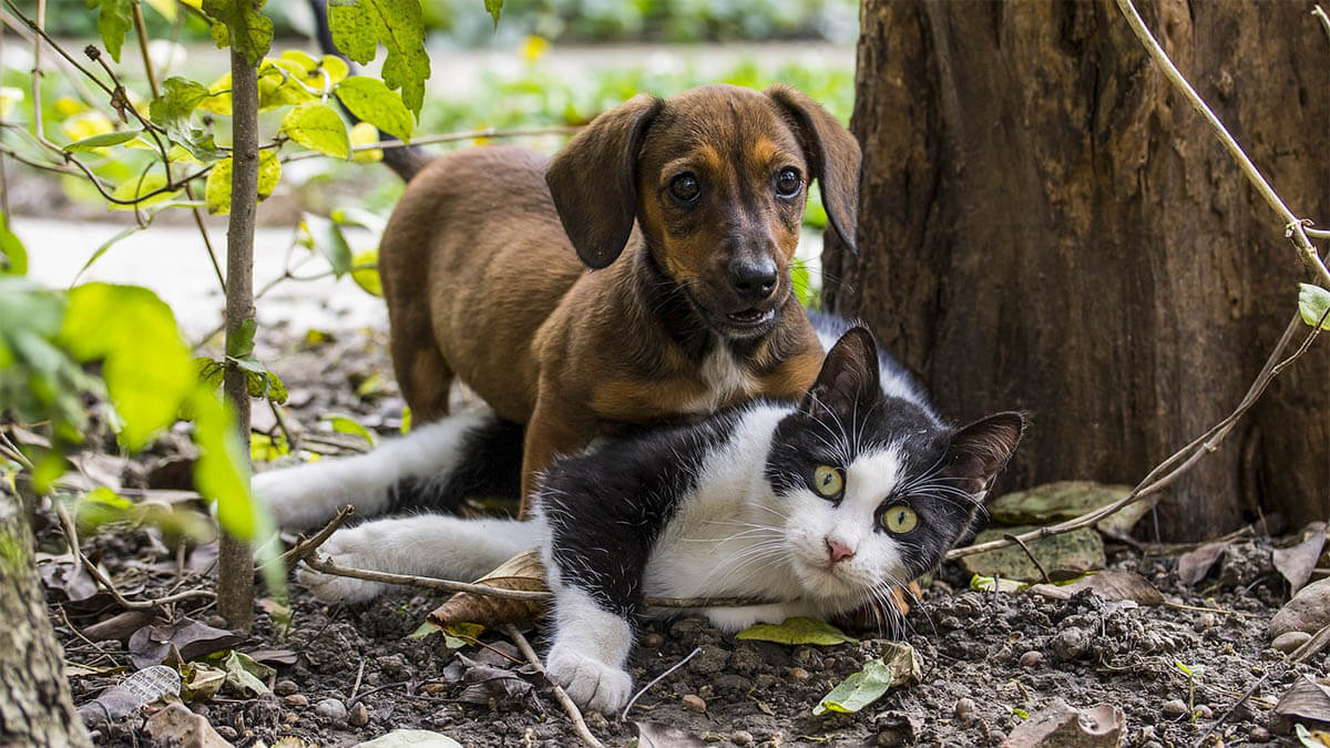 hund-und-katze-spielen