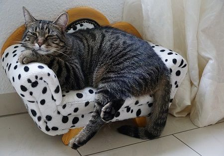 katze-couch-entspannt