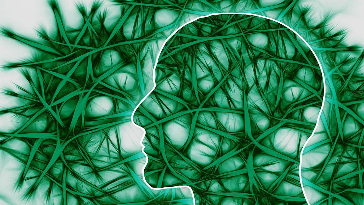 mensch-gehirn-nervenbahnen-endocannabidoides-system