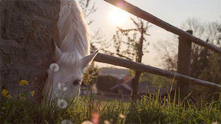 pferd-weide