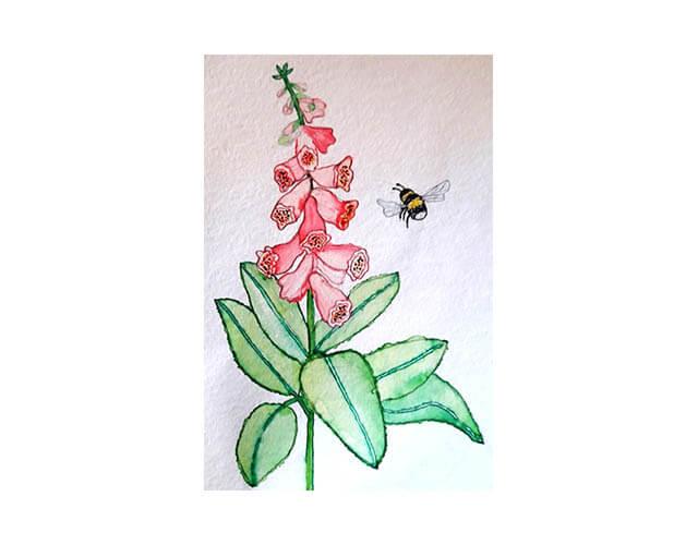 schluesselblume biene zeichnung klein