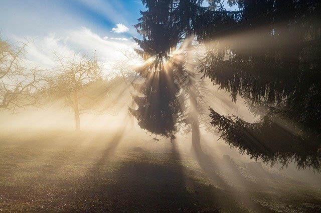sonnenstrahlen nebel wald klein