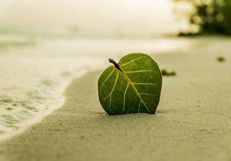 strand blatt ruhe