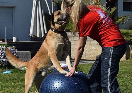 tierphysiotherapie hund 2