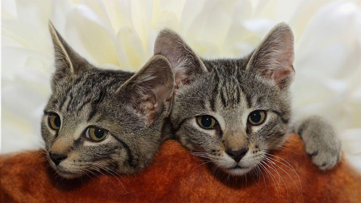 zwei-katzen-liegen-auf-kissen
