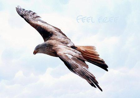 feel-free