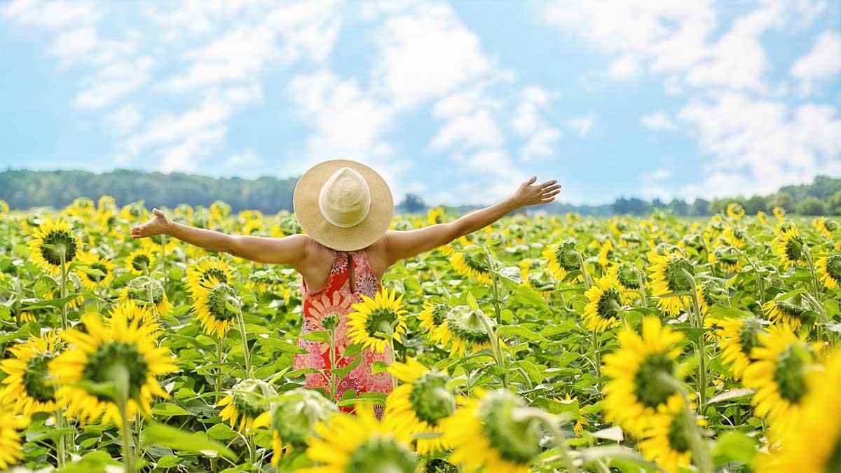 frau-sonnenblumen-freude