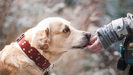 hund-wird-gefuettert