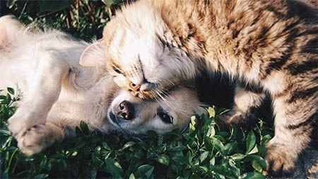 hund-katze-spielen