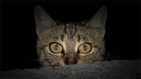 katze-nacht-dunkel