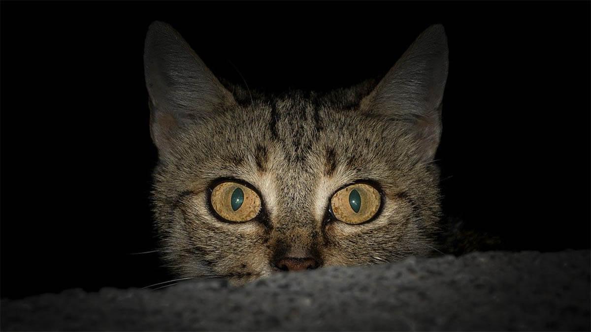 katze-nacht-schaut-auf-bett