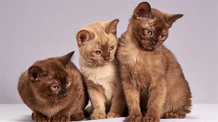 niedliche-katzen-schauen-in-eine-richtung