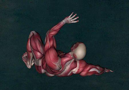 mann anatomie muskeln