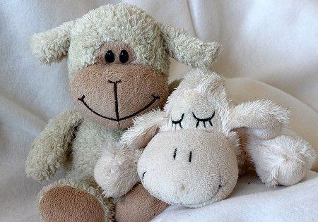 teddybaer schaf