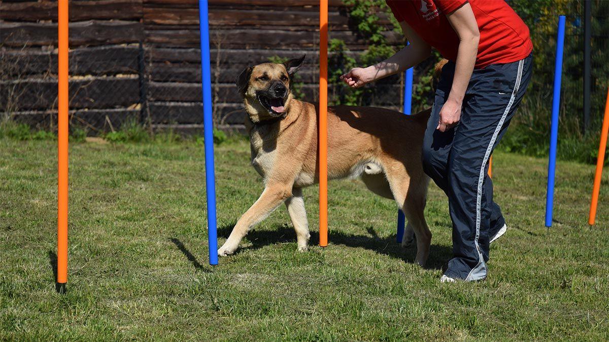 tierphysiotherapie-hund