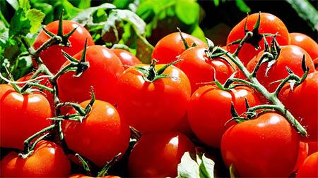 tomate kerngehaeuse entfernen