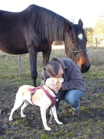 mobile Tierheilkundepraxis