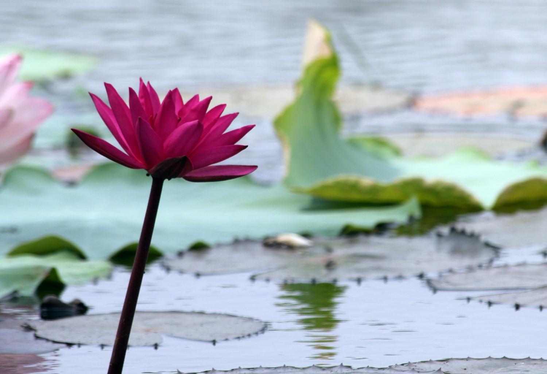 Bewusst-Sein-Coaching  - aus Liebe zum Leben-