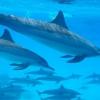 Yoga Meditation Und Delfinreisen 83 1510062628